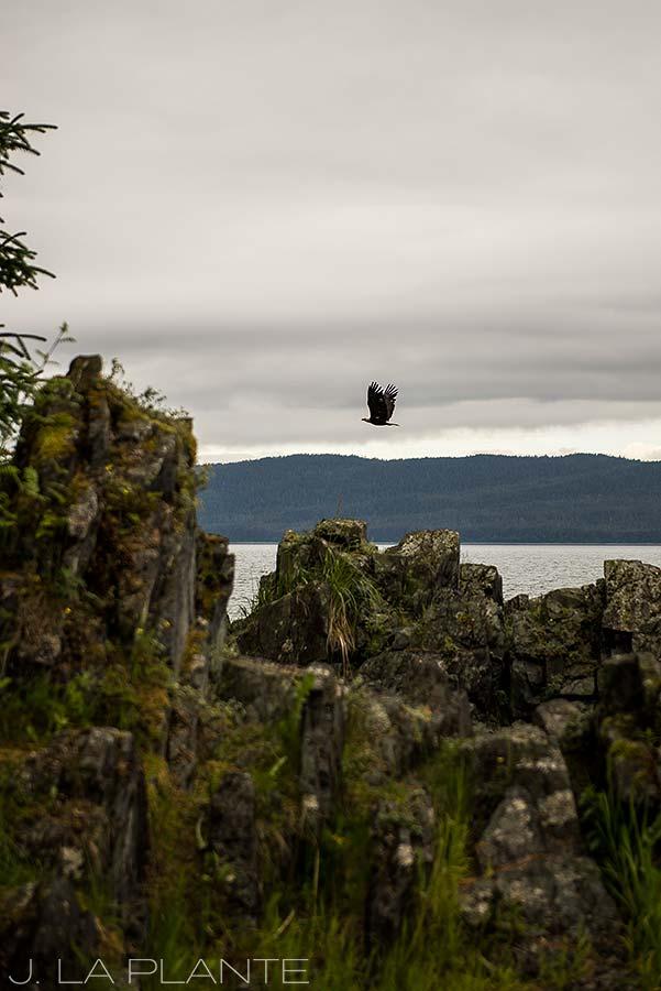 22-Juneau-Alaska-Shrine-of-Staint-Therese-Bald-Eagle