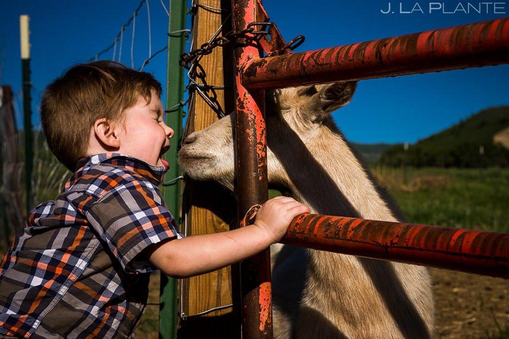 Ranch Wedding Goat | White Owl Ranch Wedding | Colorado Wedding Photographer | J. La Plante Photo