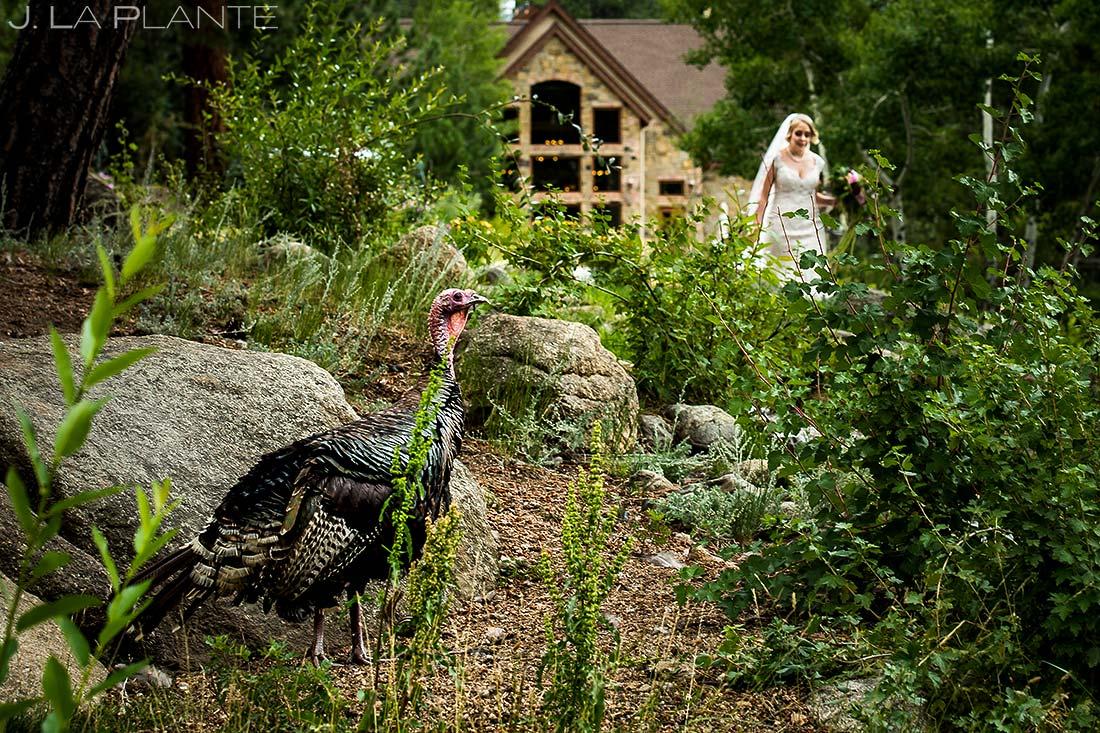Outdoor Wedding Wildlife | Della Terra Wedding | Estes Park Wedding Photographer | J. La Plante Photo