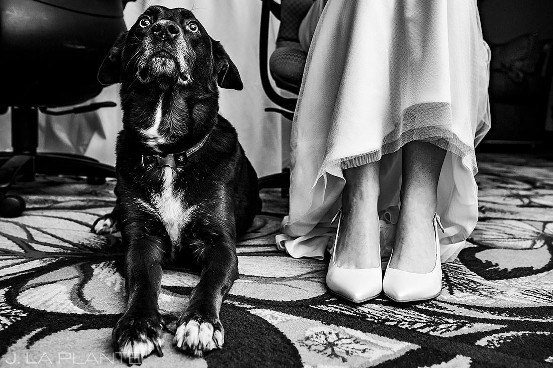 Bride with Dog | Cheyenne Mountain Resort Wedding | Colorado Springs Wedding Photographer | J. La Plante Photo