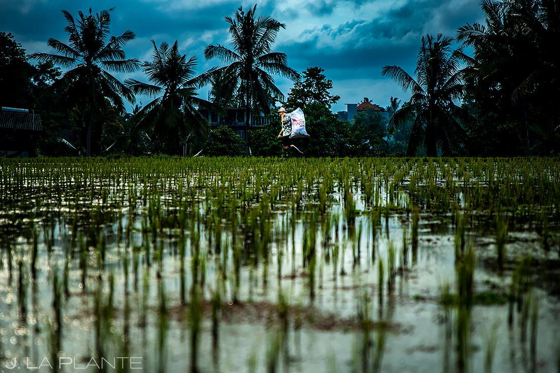 Ubud Rice Fields | Bali Indonesia | Travel Photography | J. La Plante Photo