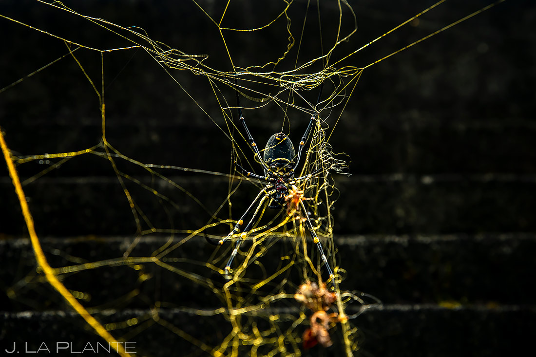 Golden Orb Spider | Indonesia | Travel Photography | J. La Plante Photo