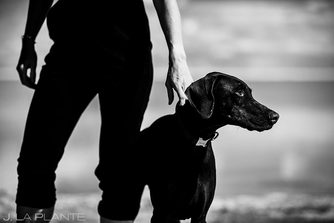 Engagement Shoot with Dog | Utah Engagement | Destination Wedding Photographer | J. La Plante Photo