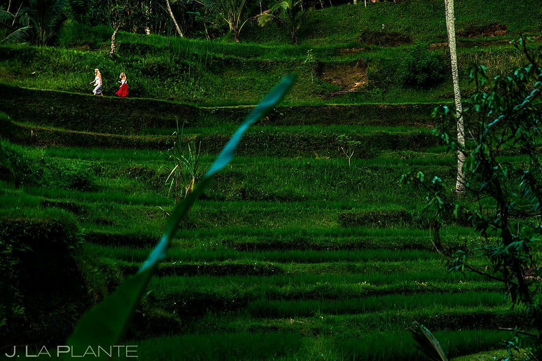 Tegallalang Rice Terraces | Bali Indonesia | Travel Photography | J. La Plante Photo
