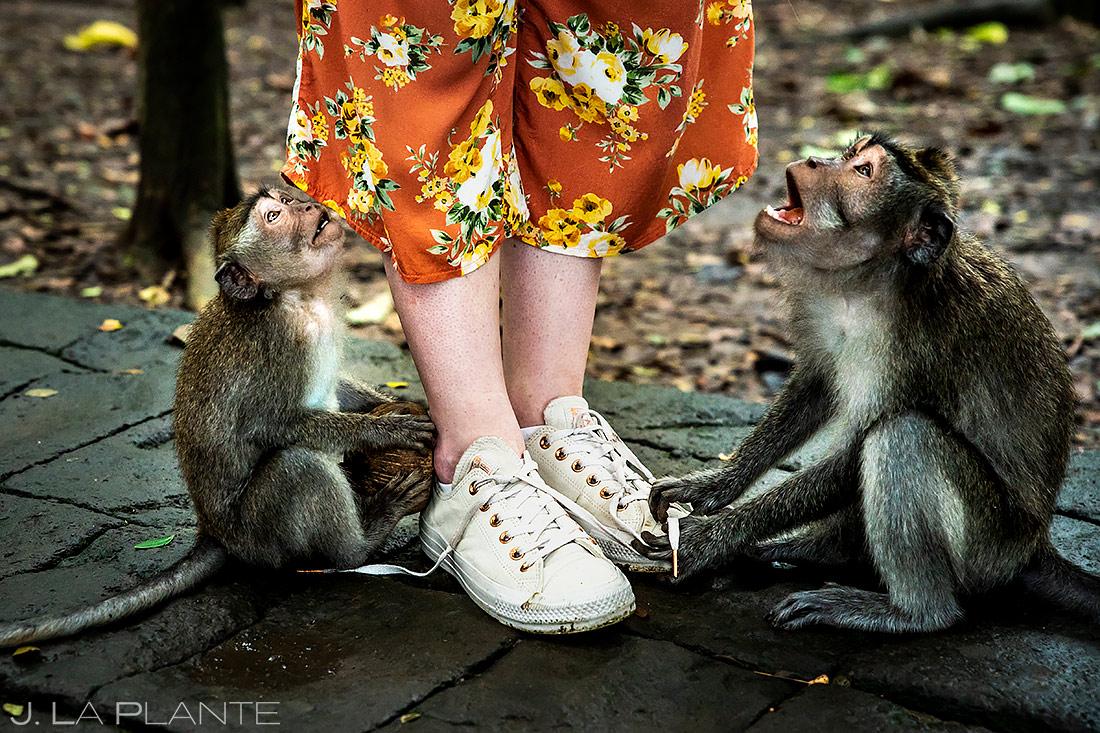 Ubud Sacred Monkey Forest Sanctuary | Indonesia | Travel Photography | J. La Plante Photo
