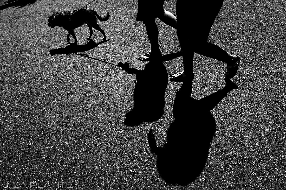 Bride and Groom Walking Dog | Denver Pre-wedding Photos | Denver Wedding Photographers | J. La Plante Photo