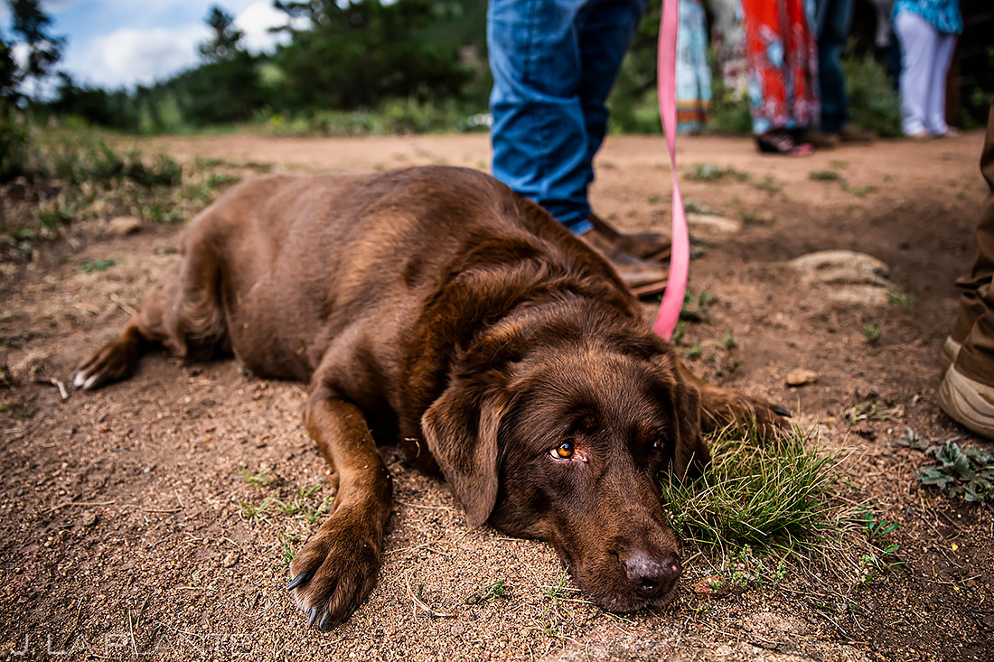 Dogs at Weddings | Estes Park Wedding | Rocky Mountain National Park Wedding Photographer | J. La Plante Photo