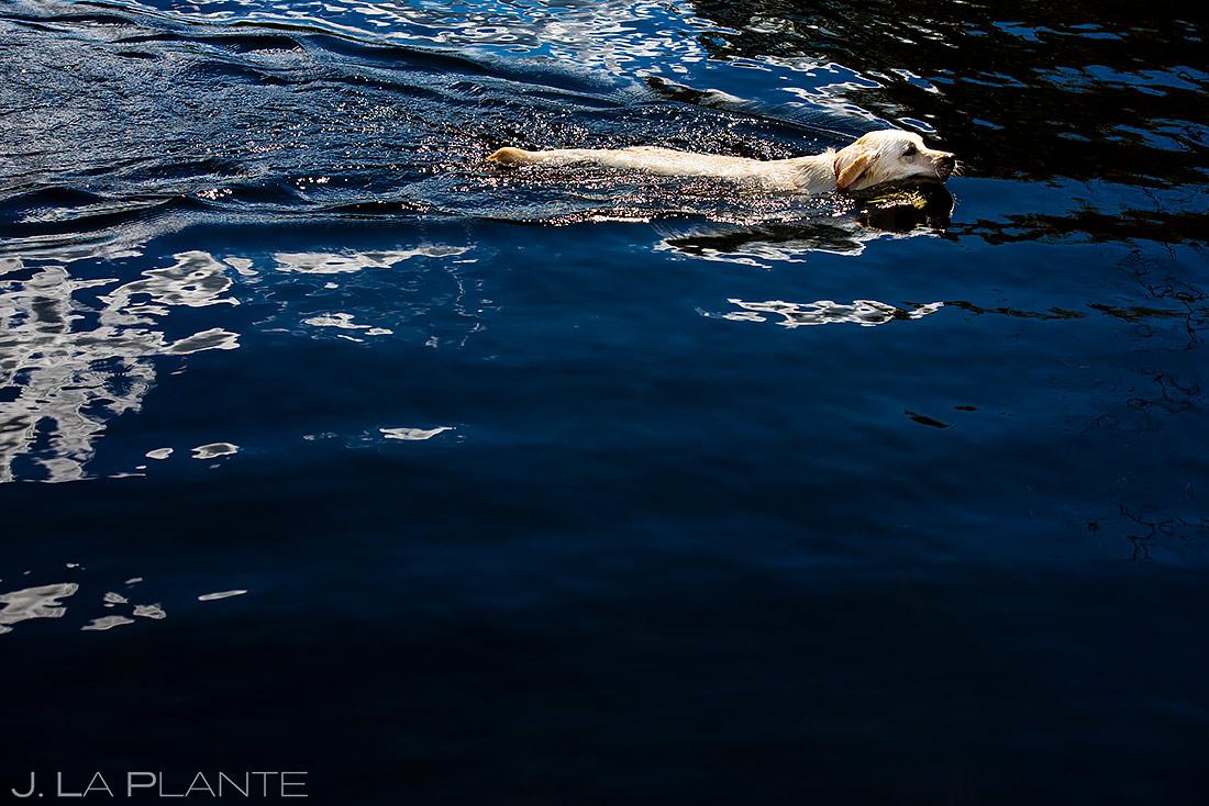 Wedding Dogs | New York Destination Wedding | Destination Wedding Photographers | J. La Plante Photo