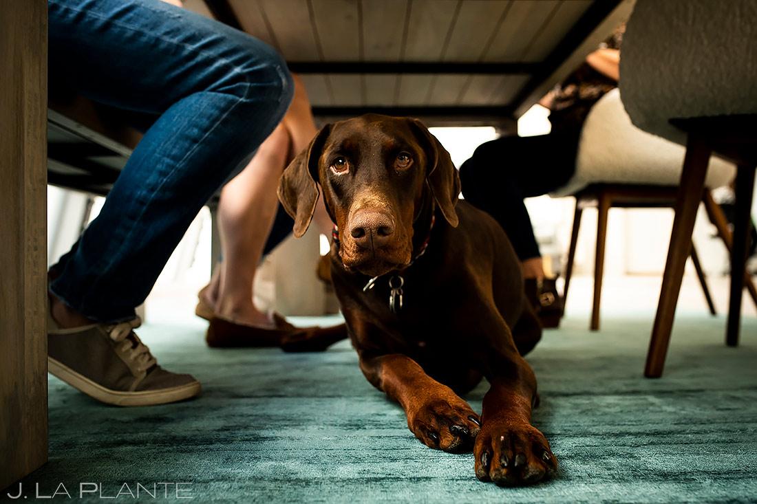 Wedding dog | Downtown Denver Wedding | Denver Wedding Photographer | J. La Plante Photo