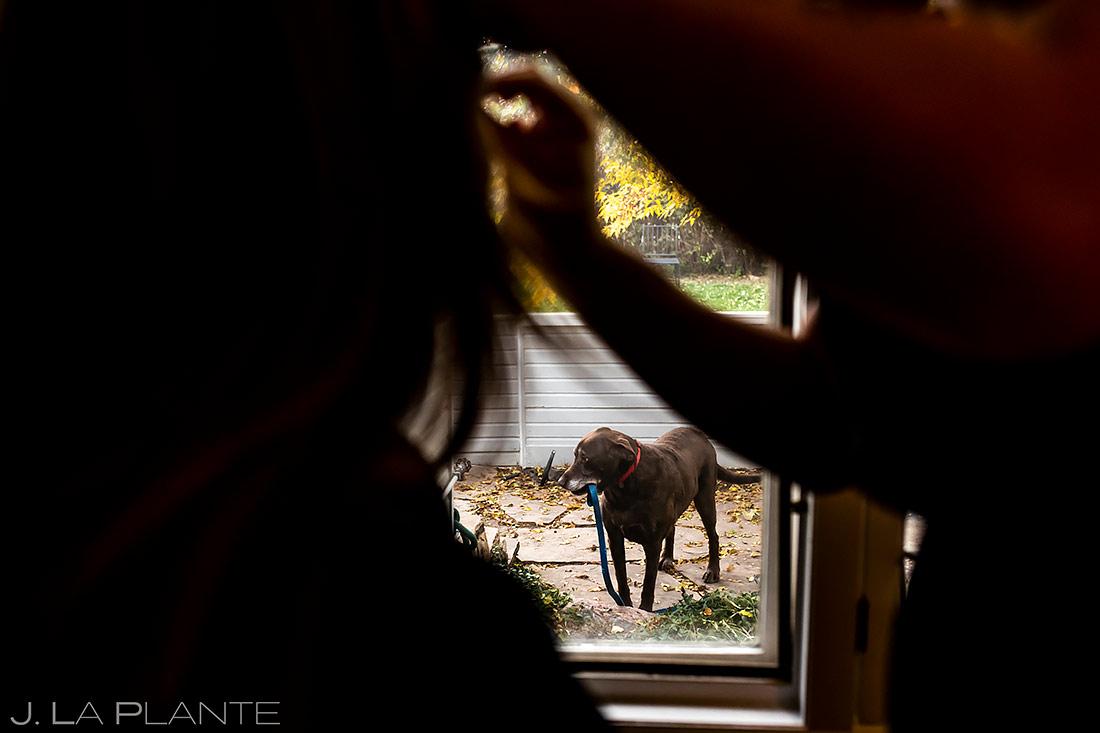 Dogs at Weddings | Denver Wedding | Denver Wedding Photographer | J. La Plante Photo
