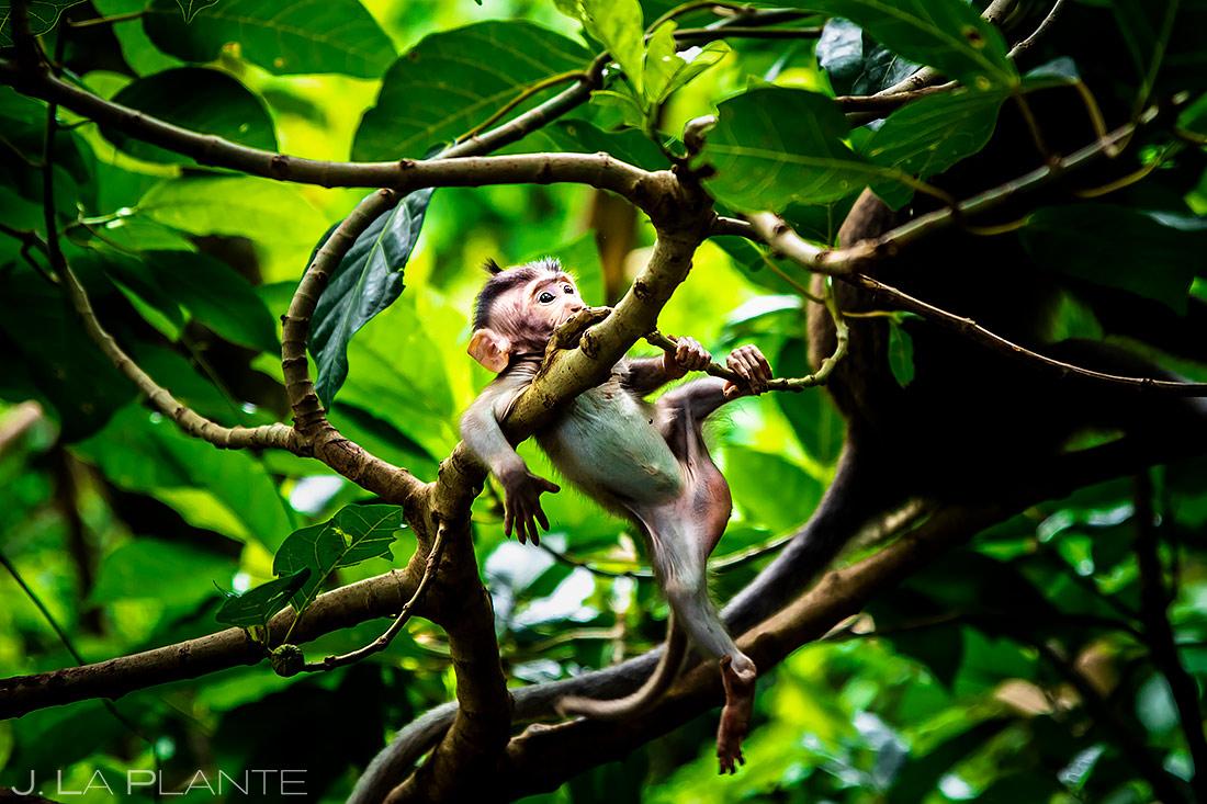Ubud Sacred Monkey Forest Sanctuary | Bali Travel Photography | Destination Travel Photographer | J. La Plante Photo