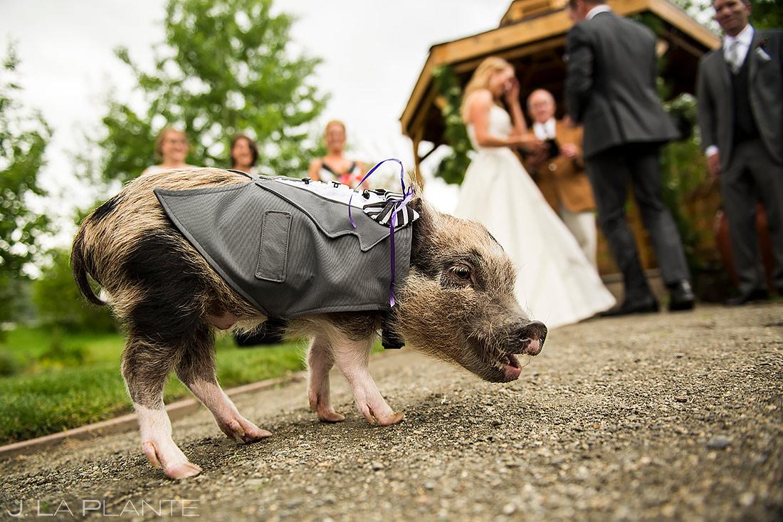 Pig Ring Bearer | Chatfield Botanic Gardens Wedding | Denver Wedding Photographer | J. La Plante Photo