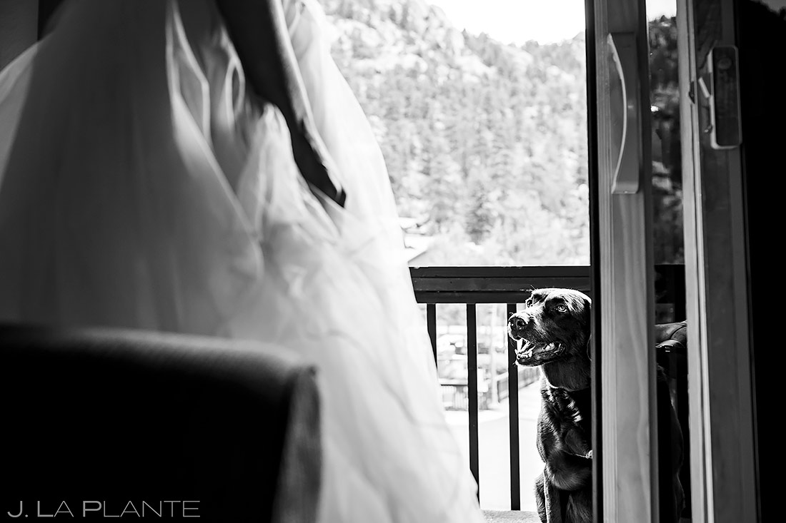 Dogs at Weddings   Rocky Mountain National Park Wedding   Estes Park Wedding Photographer   J. La Plante Photo