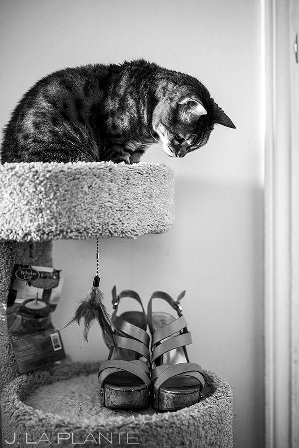 how to include your pets in your wedding   Seattle Wedding   Destination Wedding Photographer   J. La Plante Photo
