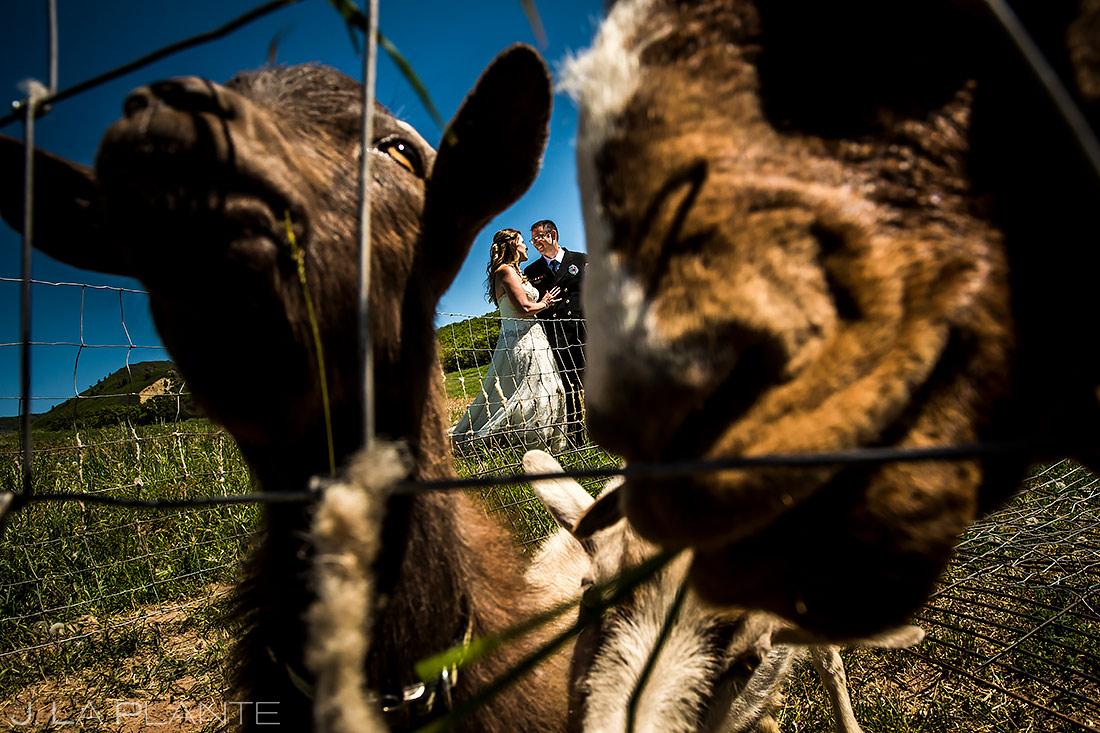 Bride and Groom with Farm Animals   White Owl Ranch Wedding   Colorado Wedding Photographer   J. La Plante Photo