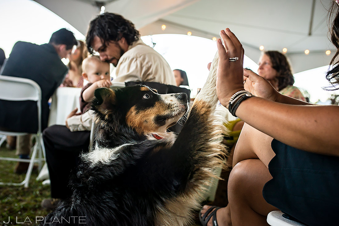 how to include your pets in your wedding   Buena Vista Colorado Wedding   Colorado Wedding Photographer   J. La Plante Photo