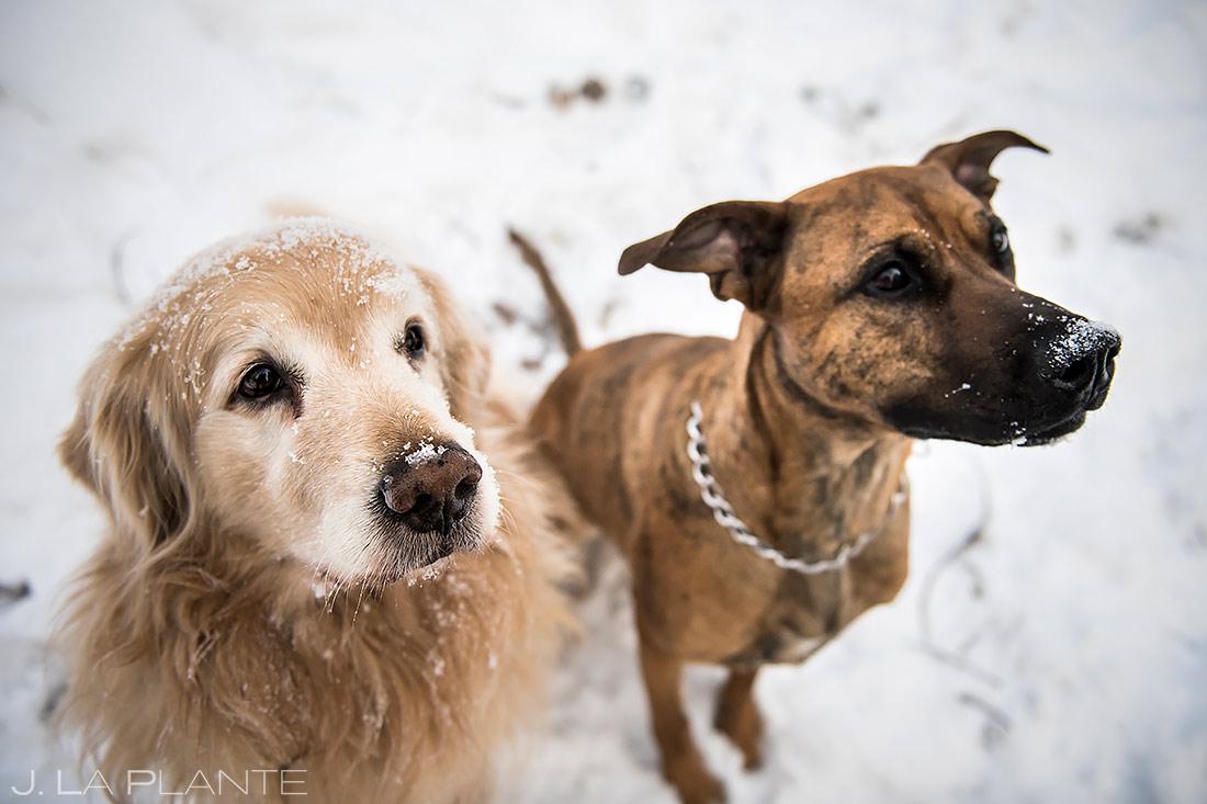 Engagement Shoots with Dogs   Golden Colorado Engagement   Golden Wedding Photographer   J. La Plante Photo