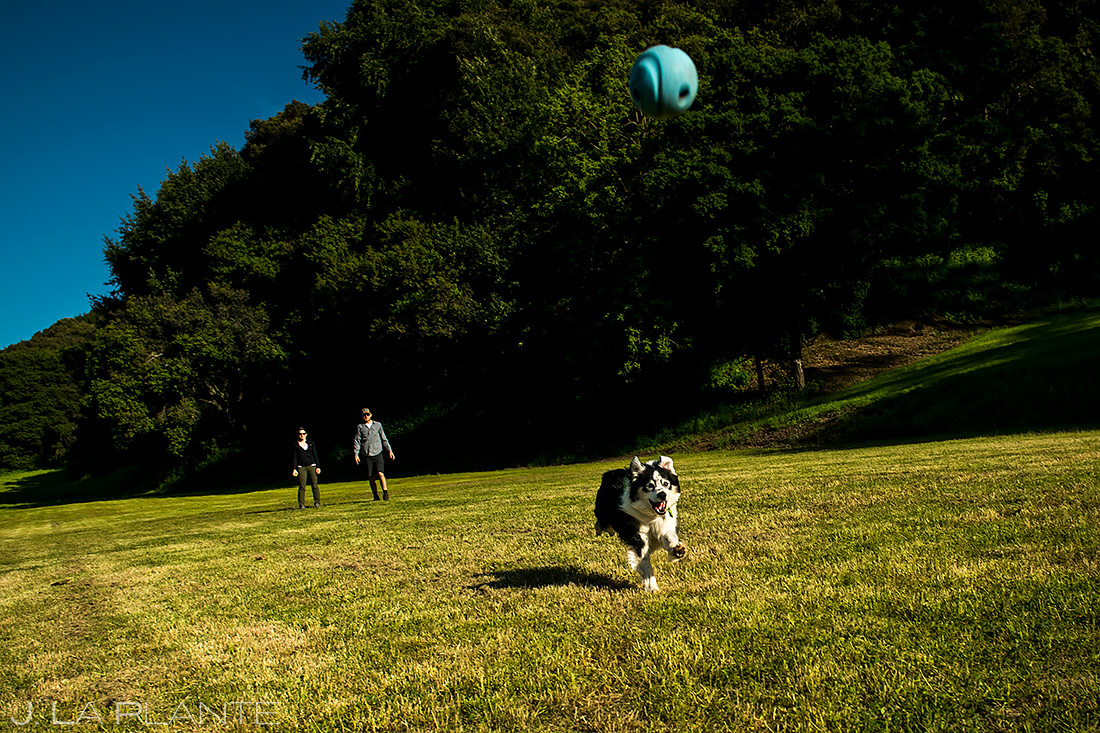 how to include your pets in your wedding   San Francisco Engagement   San Francisco Wedding Photographer   J. La Plante Photo