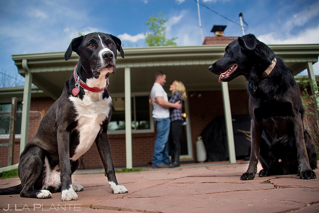 Engagement Shoots with Dogs   Denver Engagement   Denver Wedding Photographer   J. La Plante Photo