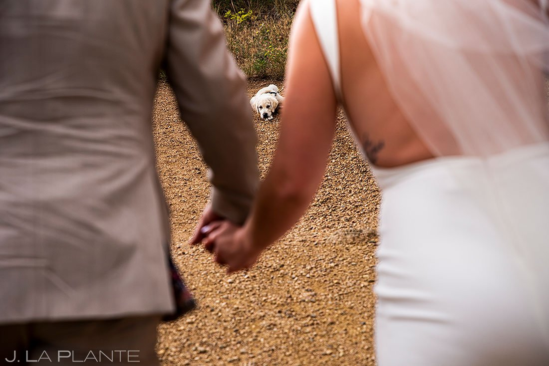 bride and groom with dog in boulder