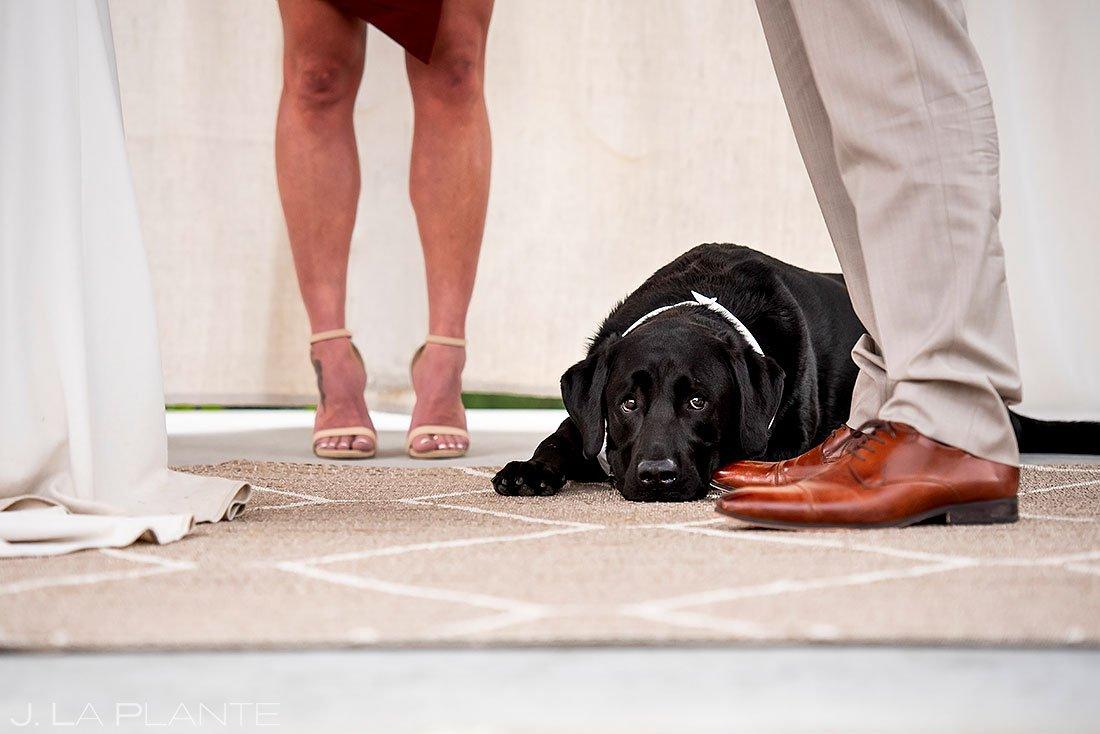 cute dog at intimate wedding ceremony