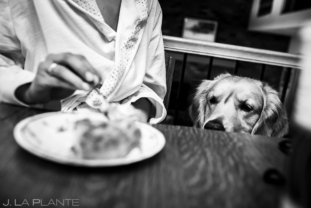 bride's dog begging for food before wedding