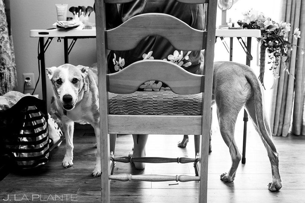 wedding dogs at backyard wedding in Boulder