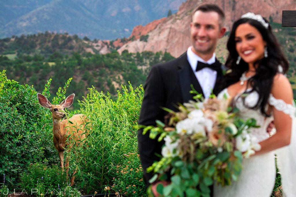 deer photobombing bride and groom during wedding