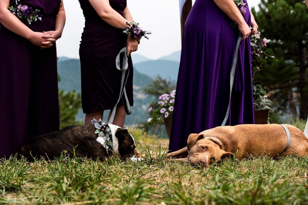 cute dogs at ceremony during backyard wedding in Boulder